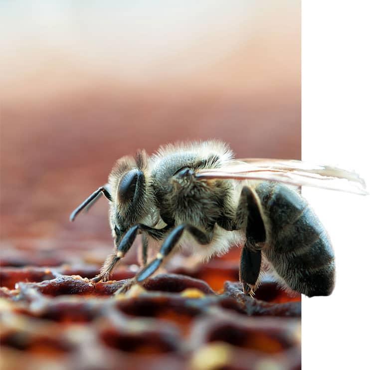 Biene beim Website designen im Ruhrgebiet